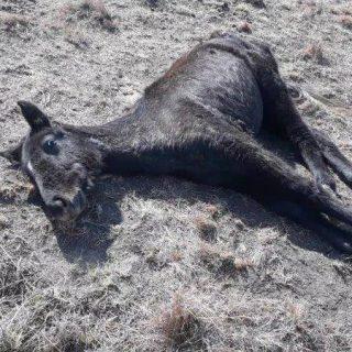 SA SPCA seizes neglected horses it says belong to Lesotho military