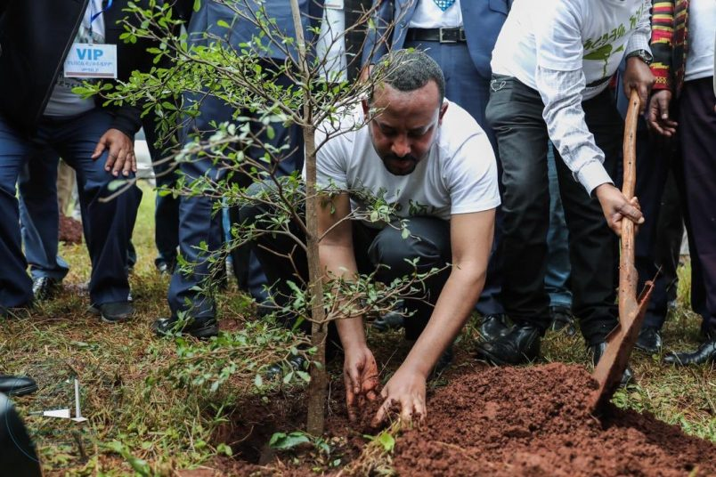 Ethiopia says it has planted 353 million trees in 12 hours