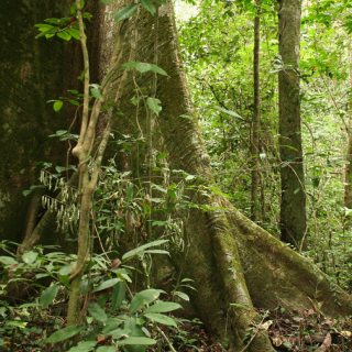 Gabon to see $150 million for protecting its rainforests