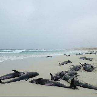 Scientists to investigate Cabo Verde whale deaths