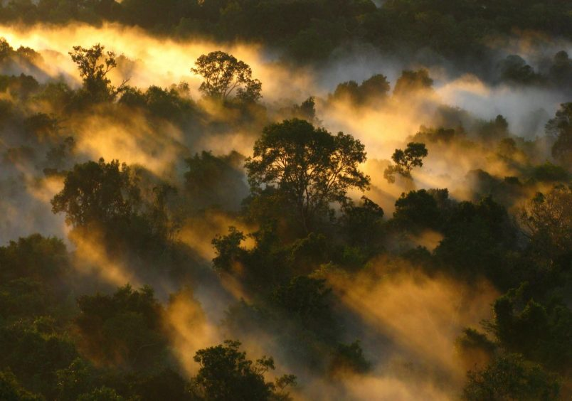 Africa's scientists warn of dire impacts to 'carbon sink' forests