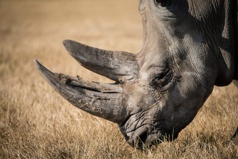 South Africa launches investigation after top poaching investigator murdered