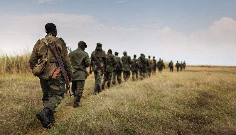 In DRC, 17 people – nearly all rangers – die in Virunga park attack