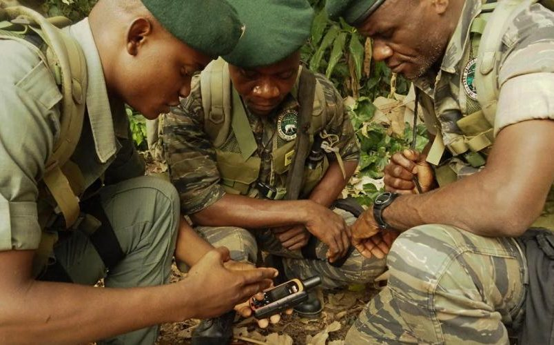 COVID threatens Africa's conservation efforts